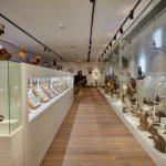 Naturmuseum Arche Noah Veranstaltungsraum Ausstellungsansicht